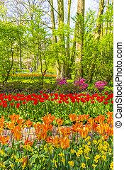 Many colorful tulips daffodils in Keukenhof park Lisse Holland Netherlands.