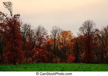 many colors in autumn