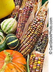 Many corn and pumpkins on the farm.