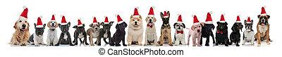 many cute dogs wearing santa claus hats