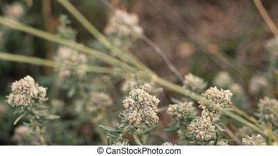 many desert wildflowers macro shot