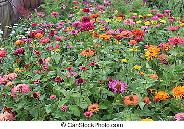 beautiful flowers on the flower-bed