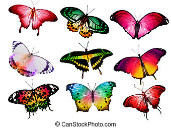 Many different butterflies,