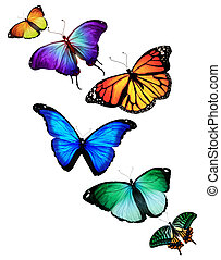 Many different butterflies flying,