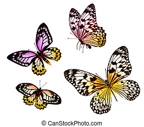 Many different butterflies, isolate