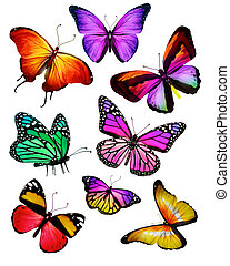 Many different butterflies