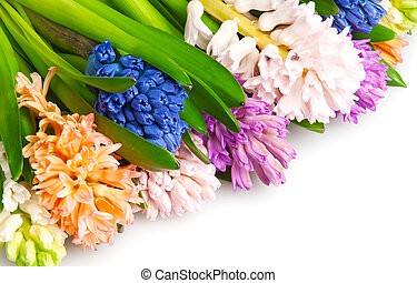 many different color hyacinth, flowers