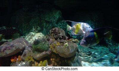 Many Different Fish In Aquarium