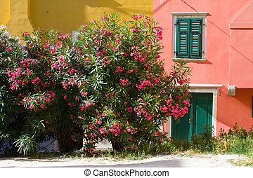 Many different flowers on a garden in Rovinj.