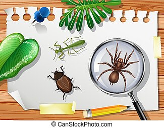 Many different insects on the table close up illustration