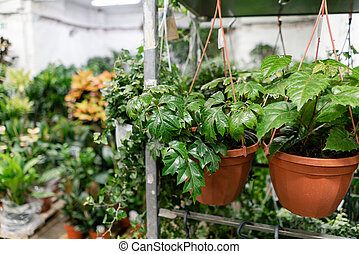 Many different plants in flower pots in flowers store. ...