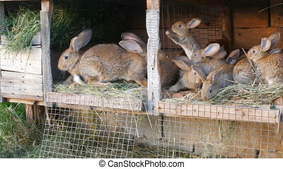 Many different rabbits in cage on the home farm