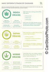 Many Different Strains of Cannabis vertical business infographic illustration about cannabis as herbal alternative medicine and chemical therapy, healthcare and medical science vector.