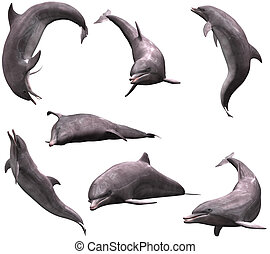Dolphins - many Dolphins in pose - isolated on white