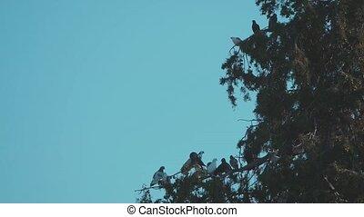 Dove Birds Sitting on the tree