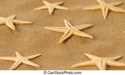 Many dried sea stars on sand, rotation