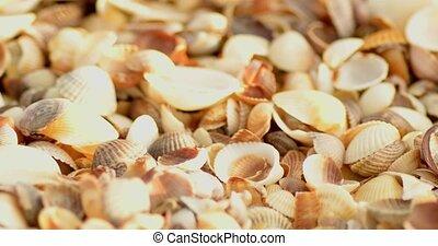 Many empty shells macro shot - Many empty shells macro...