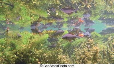 Many fishes in the fresh water