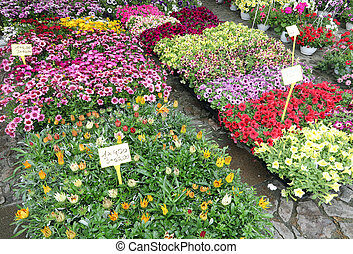 many flowers in pots at market