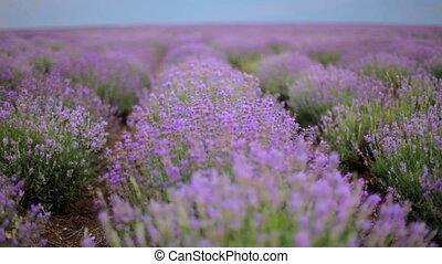 Many flowers lowande