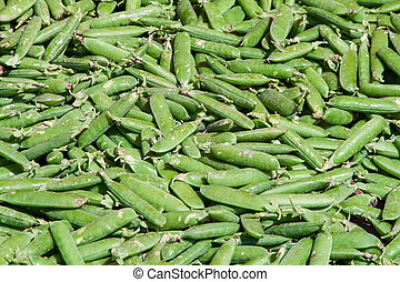 fresh green pea pods
