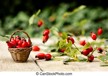 Many fresh rose hips