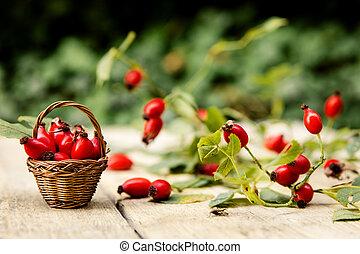 Many fresh rose hips