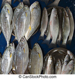 Many fresh sea fish of gray color in two rows lie on a blue oilcloth: on the left in piles there is a gray big fish tuna, on the right in metal basins is piled herring.