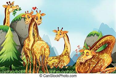 Many giraffes in the field