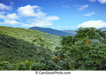 Green Hills in Blue Ridge Mountains