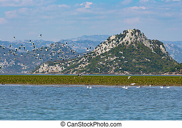Many gulls flying over the lake on a background of mountains. Skadar Lake, Montenegro