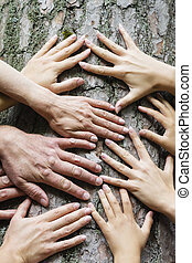 many hands on the background of an old tree, the connection between man and nature.