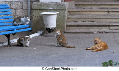 Many homeless cats sitting near a bench in the park