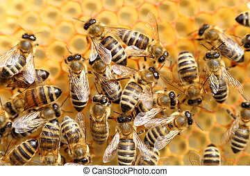 bees are working in a team