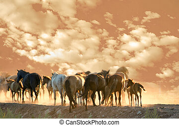 horses run at summer evening