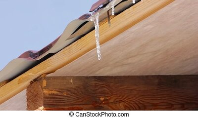 Many icicle melt in transparent water drop from roof top by...