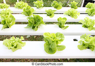 many kinds of hydroponic system - many kinds of soilless or...