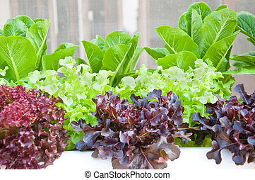 many kinds of soilless or hydroponic system