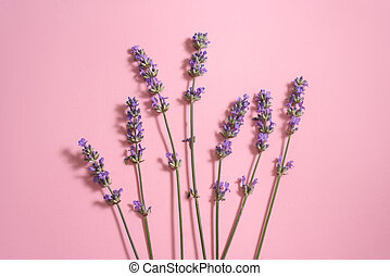 Many lavender flowers on th pink background.