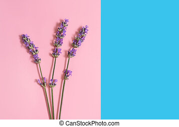Many lavender flowers on the pink and blue background.