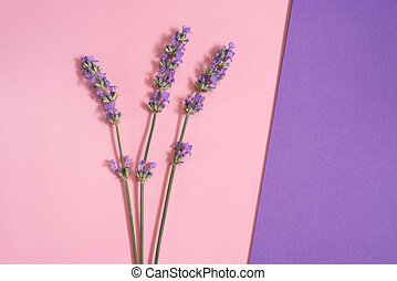 Many lavender flowers on the pink and purple background.