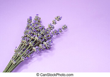 Many lavender flowers on the purple background.