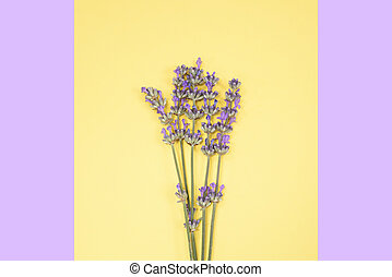 Many lavender flowers on the yellow and purple background.