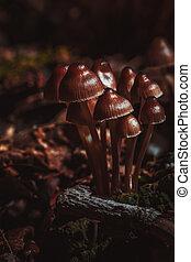 many little mushrooms on a tree stump