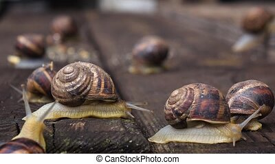 Many live snails creep the friend on the friend - Many live ...