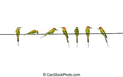 Many Meropidae birds on a cable with a white background.