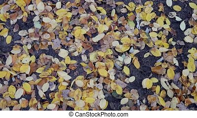 Multicoloured Fallen Leaves On The Ground In Autumn, Zoom Out