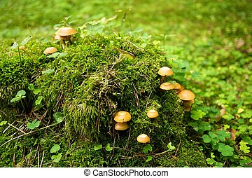Many mushrooms growing in a forest.