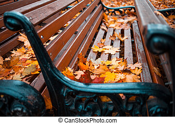 Many of benches in autumn Park covered with leaves, close-up
