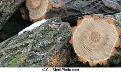 Many of felled tree trunks lying in row